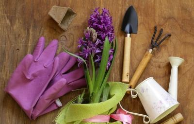 Plantas interior - Jardinería Nomeolvides