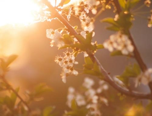 La primavera llegó…